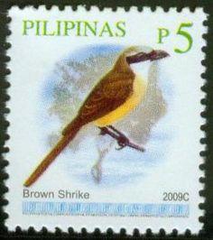 Brown Shrike 2009C