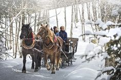 Horse sledding in Hinterglemm. What's new for the season at Skicircus Saalbach Hinterglemm Leogang Fieberbrunn – the home of Lässig. Salzburg, Ski Season, Sled, Skiing, The Incredibles, Horses, Seasons, Instagram Posts, Animals