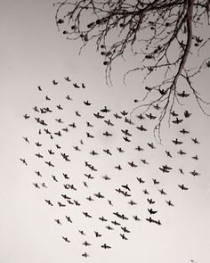 A flock of birds in a heart shape (shot by Christina Wilson,)