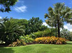 Hot Hot Heat Part Fairchild Tropical Botanic Gardens – TheGardenGeneralist Botanical Gardens, Houseplants, Container Gardening, Natural Beauty, Grass, Palm, Around The Worlds, Tropical, Explore