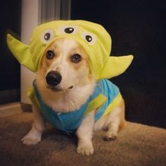 This handsome guy in his Toy Story getup. | 22 Times Corgis Proved They Are The Champions Of Halloween
