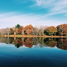 When you can't tell the reflection from the real thing 🍁🍂🍁 #BlackBearNation #GoUMaine  Photo credit to @lizzygillen