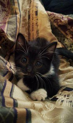 Jenavieve the junkyard kitten - Katzen - Gatos Cute Cats And Kittens, I Love Cats, Crazy Cats, Kittens Cutest, Pretty Cats, Beautiful Cats, Animals Beautiful, Cute Baby Animals, Animals And Pets