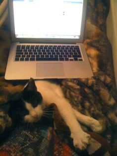 Not minding the computer at all. Crazy Cat Lady, Crazy Cats