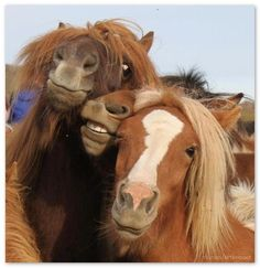Animal Selfies- Horse Selfie. For more funny animals laugh go to: http://www.badmeth.com/how-other-animals-eat-their-food/