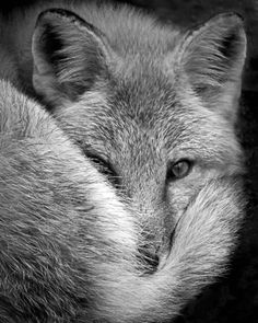 #gray