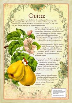 herbs for healing, Best and reliable Herbs to treat various diseases and health conditions Healing Herbs, Medicinal Plants, Garden Trees, Garden Plants, Home Remedies, Natural Remedies, Pallets Garden, Herbal Medicine, Fruit