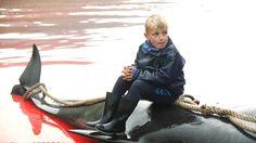 Petit aperçu du tournage de cet été pour mon projet de documentaire sur la chasse à la baleine. ATTENTION: certaines images peuvent choquer. WARNING: Graphic content.  Musique « Sarajevo » de Max Richter  Pour voir le premier teaser du tournage de 2014:  http://www.vincentkelner.com/portfolio/teaser-le-grind-aux-iles-feroe/