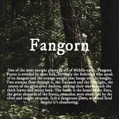 Fangorn was my favorite place in middle earth besides edoras and the shire
