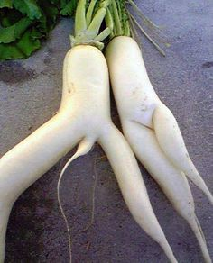 and yet more vegetable humour