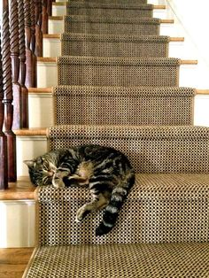 Cat sleeping on stairs I Love Cats, Cute Cats, Funny Cats, Crazy Cat Lady, Crazy Cats, Gatos Cats, Photo Chat, Here Kitty Kitty, Sleepy Kitty