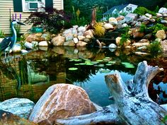 Koi Pond at dusk  For more info visit: www.iloveponds.com/water-features/koi-pond.html