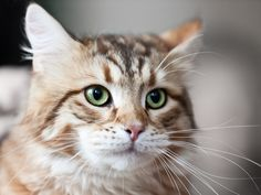 6 Signs Your Cat May Be Suffering From Arthritis (Meowch!)