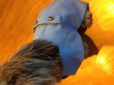 Light blue lined dog coat