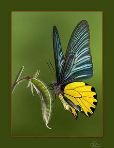 20 Beautiful Macro Photography Shots of Butterflies  