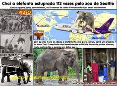 Mural Animal: Chai a elefanta estuprada 112 vezes pelo zoo de Se...