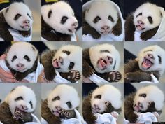 So many expressions from a little panda!
