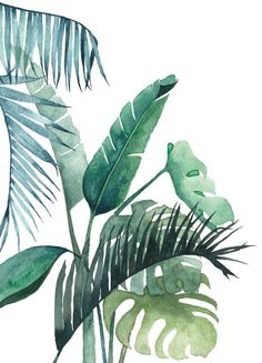 Postcard Botanical Illustrated Postcard Watercolor Etsy - Postcard Botanical Illustrated Postcard Watercolor Beautiful Postcard With A Print From My Original Tropical Illustration Made With Watercolor Printed At Grs Biotop Paper The Size Of This Illustration Botanique, Plant Illustration, Botanical Illustration, Watercolor Illustration, Plant Painting, Plant Art, Painting & Drawing, Watercolor Plants, Watercolor Paintings