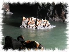 The Sea Lion Caves near Lincoln City Oregon. Yeah, just a touch odorous but still cool to visit.