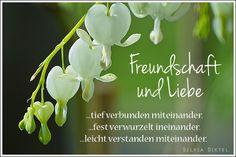 Freundschaft und Liebe...