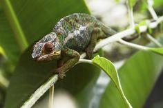 Madagaskar Individualreisen-Angebote: Reisen Sie individuell nach Madagaskar! Private, deutschsprachig geführte Reise beim Spezialisten online buchen!