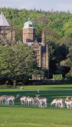 Nearby to Cartmel is Holker Hall, the friendly and welcoming stately home owned and lived in by Lord & Lady Cavendish and their family. The beautiful 25 acres of national award-winning gardens are classed amongst the best in the world.