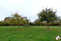 Vous souhaitez faire l'achat d'un terrain dans l'Eure ? Finalisez votre projet immobilier à Saint-Aubin-le-Guichard, entre particuliers http://www.partenaire-europeen.fr/Actualites/Achat-Vente-entre-particuliers/Immobilier-terrains-a-decouvrir/Terrains-entre-particuliers-en-Haute-Normandie/Terrain-arbore-constructible-grange-ID3210301-20170331 #Terrain