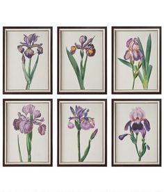 Meet our beautiful collection of purple irises! This set of six prints is under glass and accented with a silver finish. (Country Curtains Iris Prints Set of 6)