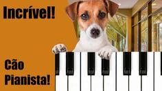 Curioso: Cão Pianista! https://www.youtube.com/watch?v=WsfDdzAmT8U