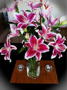 beautiful stargazer lilies Types Of Flowers, Beautiful Flowers, Calla Lily, Stargazer Lilies, Wedding Bouquets, Wedding Flowers, Gerber Daisies, Love Garden, Pink Lily