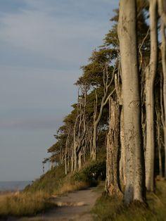 Plants, Pictures, Baltic Sea, Plant, Planets