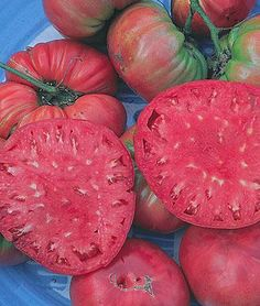 Giant Pink Belgium Tomato Seeds and Plants, Vegetable Gardening at Burpee.com  Another gorgeous heirloom that would be great for canning and making spaghetti sauce!
