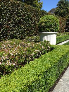 Garden Design Ideas : Indian Hawthorn Shrub (Raphiolepsis 'Spring Pearl') – planted in front of Lilly Pilly Hedge Hedges Landscaping, Florida Landscaping, Front Yard Landscaping, Seaside Garden, Tropical Garden, Back Gardens, Outdoor Gardens, Landscape Design, Garden Design