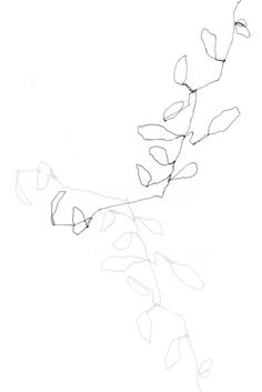 """This is a fine art giclee of an original drawing that was created on several layers of semi-transparentvellum.  Often using one continuous line and looking solely at the subject for the duration of the study, this drawing technique captures observation in all it's accuracies or faults.    Eucalyptus 1 is printed on 100% archival rag paper using archival inks and includes a minimum border of 1"""" for easy framing."""