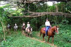 Beautiful St. Croix. Horse riding www.stable-mates.com