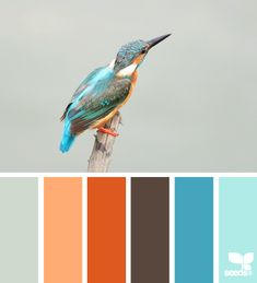 Bright, happy, contrasting oranges and blues lend themselves well to a high Playfulness value. Also works well for Innovation & Community. | kingfisher hues via Design-Seeds | commentary via The Voice Bureau at AbbyKerr.com