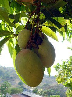 ... •• Cooked Varieties on Pinterest   Fruit, Raspberries and Pears