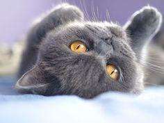 Streichel mich! Flauschig, weiche Katzen sind einfach zum Kuscheln