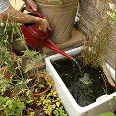 Create a mini pond using a Belfast sink