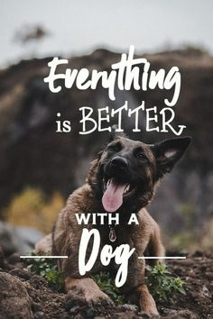 Best Dog Quotes, Dog Quotes Love, Dog Quotes Funny, Dog Memes, Funny Dogs, Funny Animals, Dog Quotes Inspirational, Pet Quotes, Funny Sayings