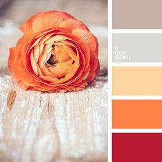 Morning rose color palette