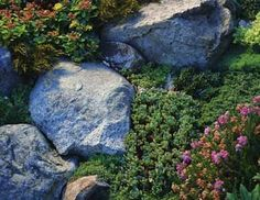 Good Plants and Erosion Controls for Slopes and Hillsides informative list