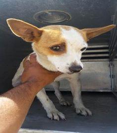 ~~eu date 07/06/15 super urgent!!~~ TRENTON (06012015F-D02) located in Delano, CA has 9 days Left to Live. Adopt him now!