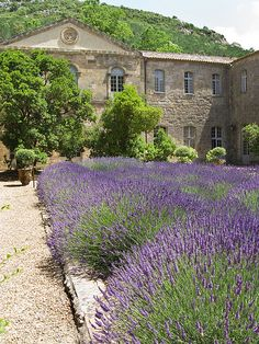 Provence ~ By now you know that I love Provence and Lavender!