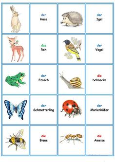 Games in German class: Memory - the animals - Games in German lessons: Memory – the animals worksheet – free DAF worksheets - German Grammar, German Words, Animal Pictures For Kids, Languages Online, German Language Learning, Learn German, Classroom Language, Kindergarten Activities, Memories