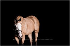 Karinda K Houston Texas Equine Photographer