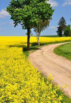 Polish landscape... - , Warminsko-Mazurskie