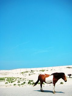 Assateague Island, Maryland