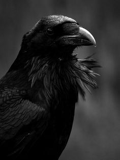 And ideas are bulletproof... #Raven #black