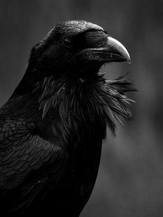 blackval0r:  ~